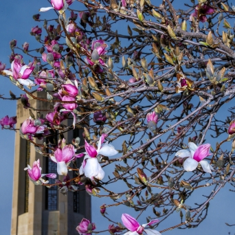 flowers on a tree with building in the background